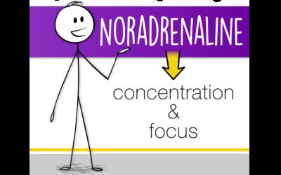 Neurotransmitter Series Part 2: Noradrenaline